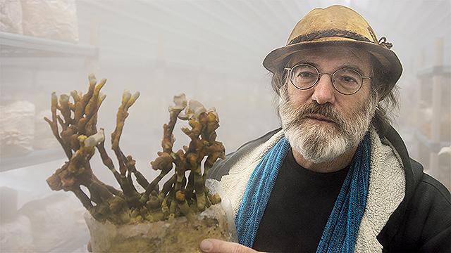 素晴らしき、きのこの世界/Fantastic Fungi